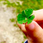 six leaves clover